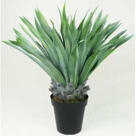 PIANTA AGAVE TEQUILINA CM 73 H